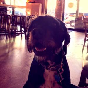 Dog-Friendly Establishment